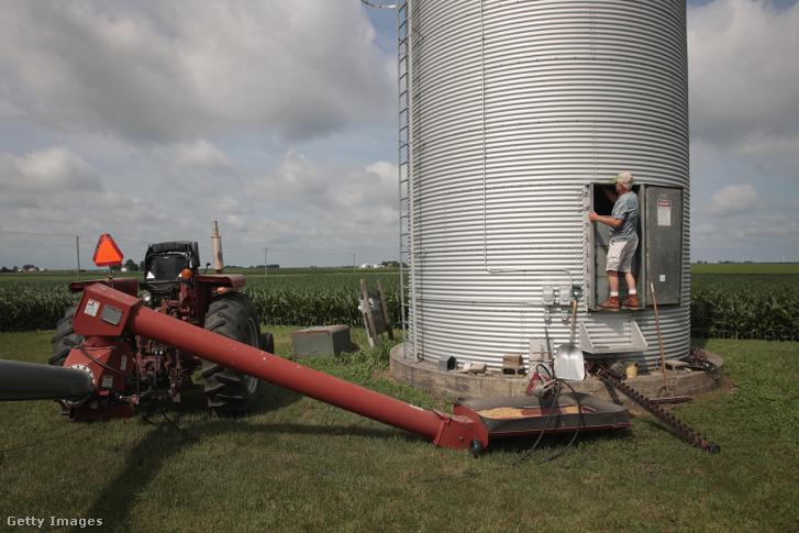 John Duffy amerikai földművelő a betakarított szójababot készíti szállításra