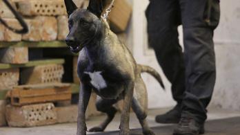 Deus ex juhászkutya mentette meg a rendőröket