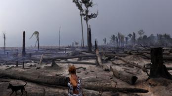Brazília mégsem tud egyedül megbirkózni az esőerdők pusztulásával