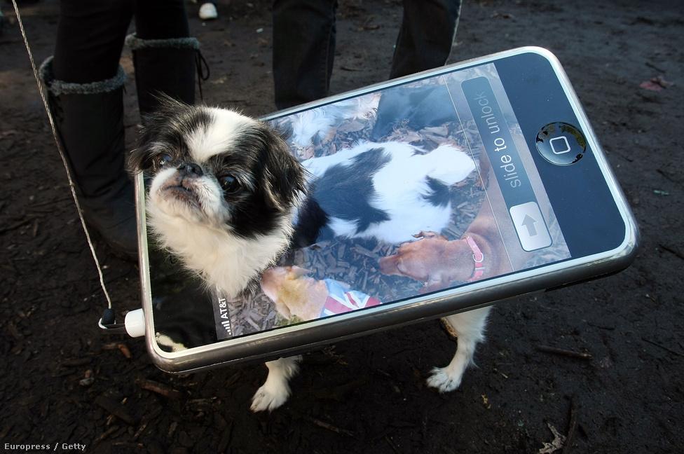 2007. október 28.  Egy ötletes kutyakosztüm a New York-i  Tompkins Téri Halloween Kutyaparádén.