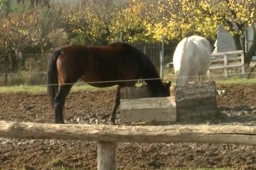 brunner-márta-lovak