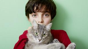 Azok közé tartozol, akik tényleg értik a macskákat?