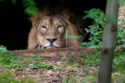 oroszlán állatkert terasz
