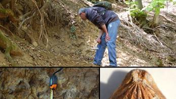 Három új ősmaradványfajt tártak fel a Mecsekben