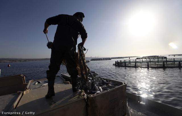 Ciprusi halász