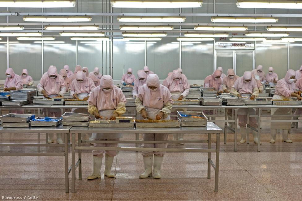Húsipar a XXI. században: amerikai tulajdonú kínai húsfeldolgozó üzem.