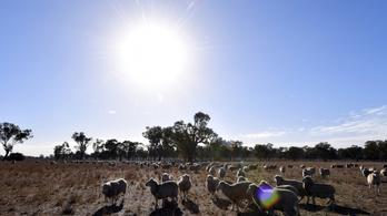 48 fokos hőség tombol Ausztráliában