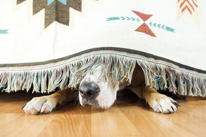 ijedt-kutyus