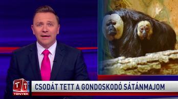 Berosált a TV2-től a versenyhivatal