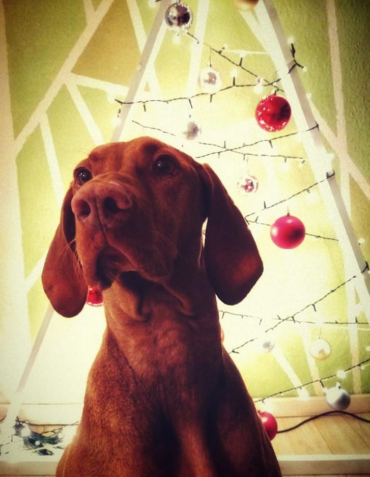 Mira és Kata karácsonyfája