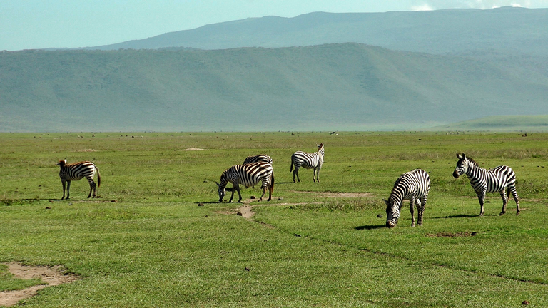 A világ legnagyobb természetes állatkertje