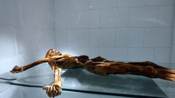 Íjhúr lehetett az Ötzi tegezében talált rejtélyes madzag