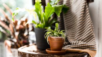 Lakásdzsungel: így lettek a szobanövények igazi házi kedvencek