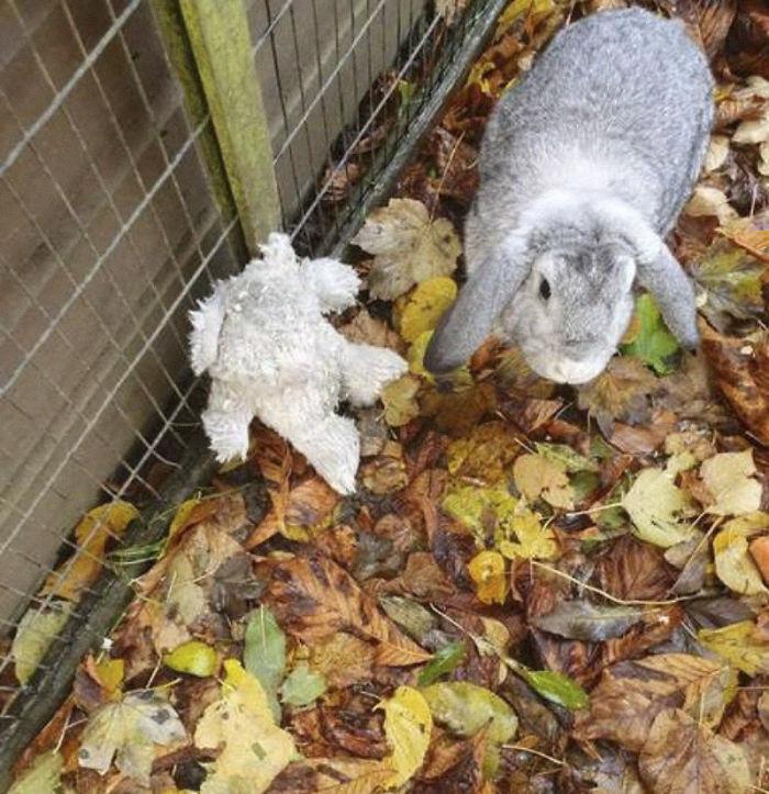 abandoned-rabbit-teddy-bear-nigel-4-5ddb87089b3bf  700