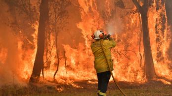 Két hónap alatt nyolc tűzoltó halt meg az ausztrál bozóttüzek miatt