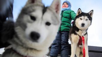 A kutyák a skizofrénia kialakulása ellen is jók