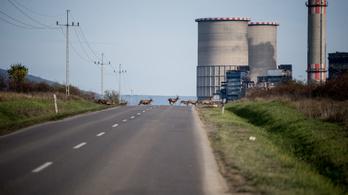 Már biztos: az MVM-hez kerül a Mátrai Erőmű
