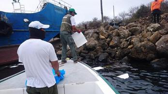 Olajfolt fenyegeti a galápagosi teknősöket