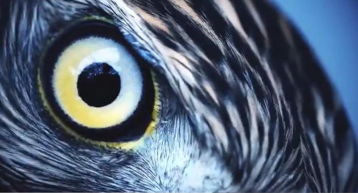 A sas szeme egy tökéletes optikai rendszer