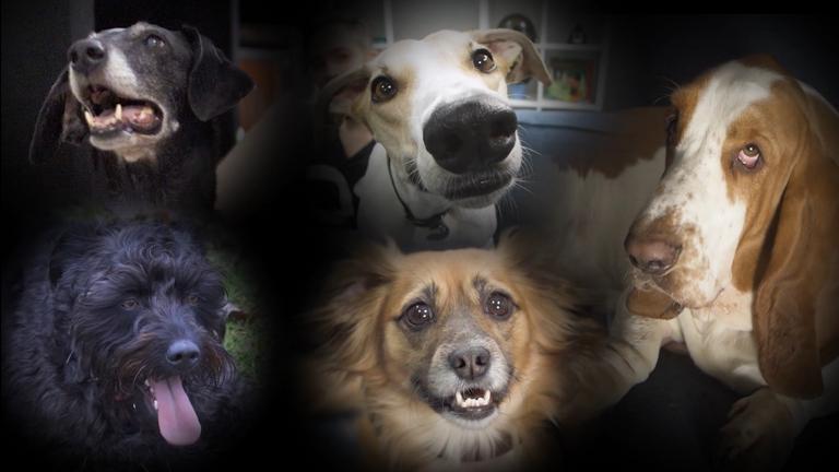 Hogyan éljük túl kutyánkkal a szilvesztert?