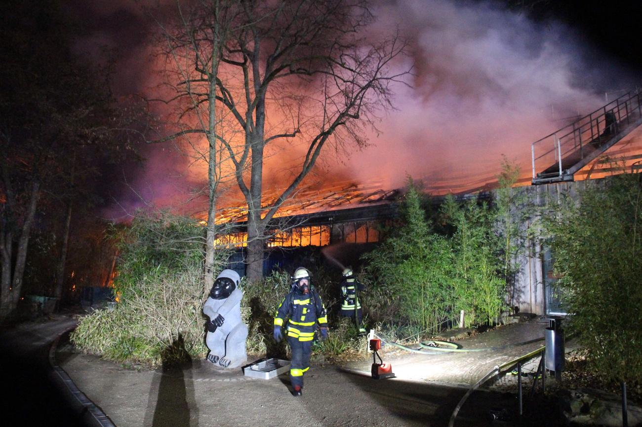 Leégett egy majomház a németországi Krefeldben