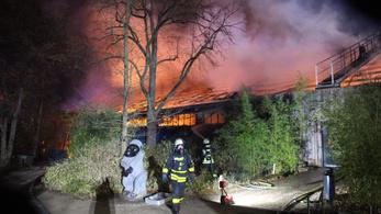 Leégett egy majomház a németországi Krefeldben, több mint 30 állat pusztult el
