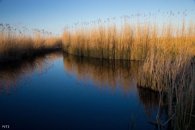 Nádas a Fertő-Hanság Nemzeti Parkban
