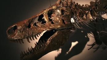 Mégsem létezett a T. rex törpe rokona