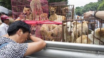 Évente 10 millió kutyát esznek meg a kínaiak, a fogyasztás sajnálatosan nő