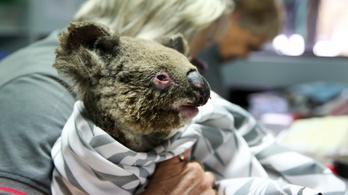 Honnan tudjuk, hogy félmilliárd állat égett el elevenen az ausztrál bozóttüzekben?