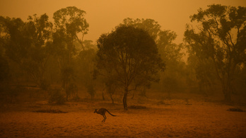"""Több állatfaj is kipusztulhat az """"ausztráliai Galápagos-szigeteken"""""""