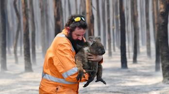 A pólójába bugyolálva mentette a megégett, síró koalát