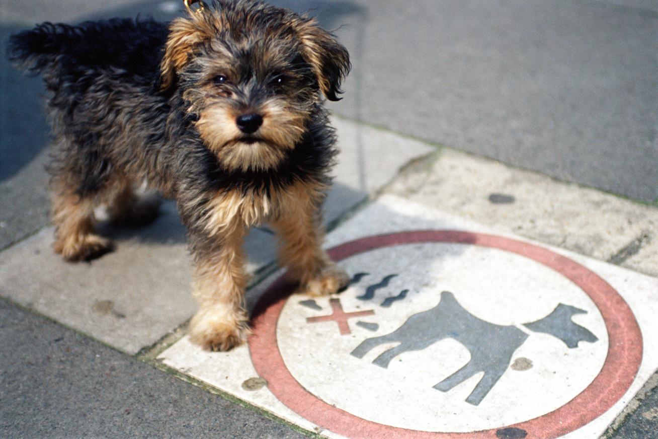 sztrájkoló kutya nyitó