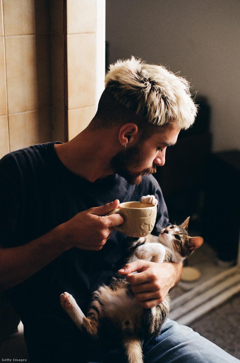 macska-pasi