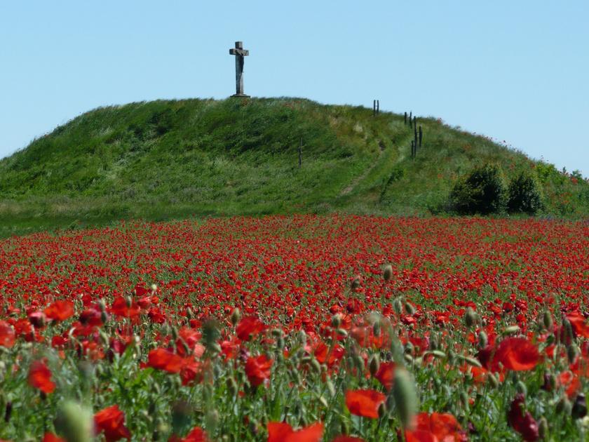 Fegyvernek Kálvária-dombját körülöleli a pirosan izzó pipacsmező.