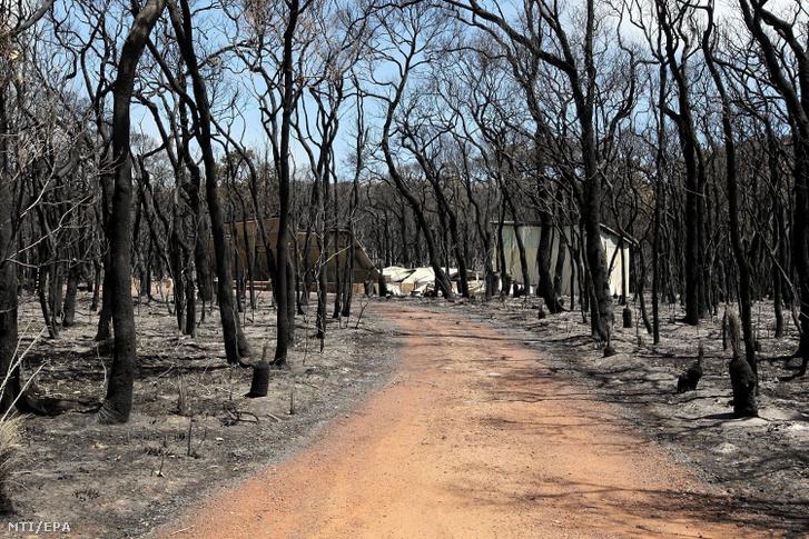 Kiégett fák között fut egy földút a nyugat-ausztráliai Orchard Ramble-ben egy bozóttüzet követően. A tűz egy tervezett égetés során szabadult el a Leeuwin-Naturalista nemzeti parkból és több mint háromezer hektáron több tucat otthont és nyaralót pusztított el 2011-ben.