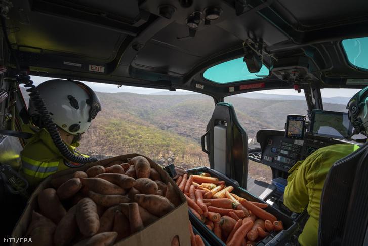 Az Új-dél-walesi Nemzeti Parkok és Vadvédelmi Szolgálat által közreadott képen helikopterrel sárgarépát és édesburgonyát szállítanak a bozóttüzek miatt veszélyhelyzetbe került vadállatoknak az ausztráliai Új-Dél-Walesben 2020. január 11-én.