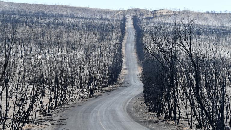 Ausztráliát a bozóttüzekre találták ki