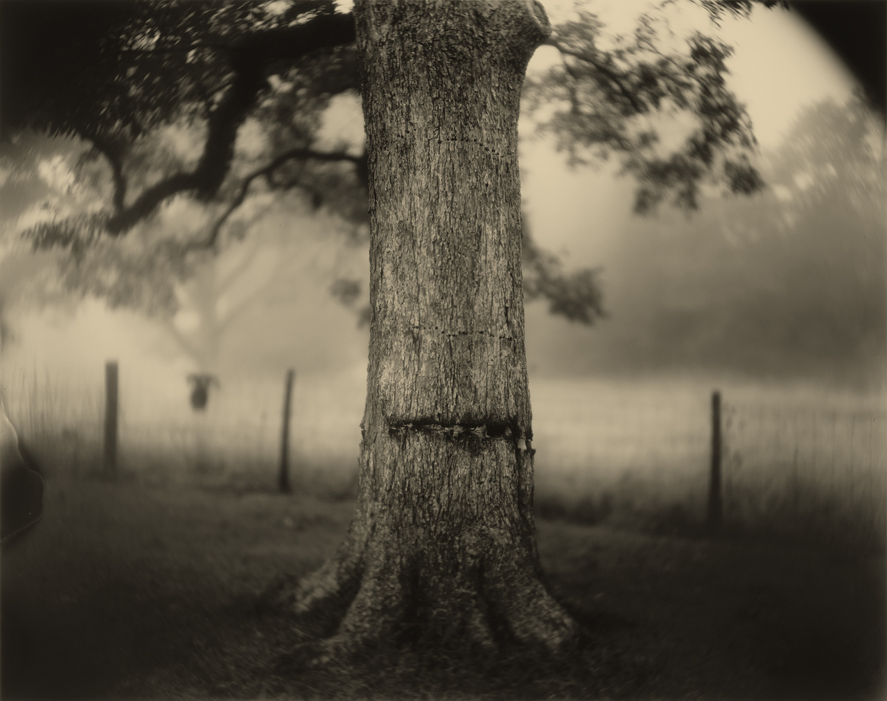 Deep South Untitled (Scarred Tree) 1998 gelatin silver print National Gallery of Art Washington Alfred H. Moses and Fern M. Schad Fund