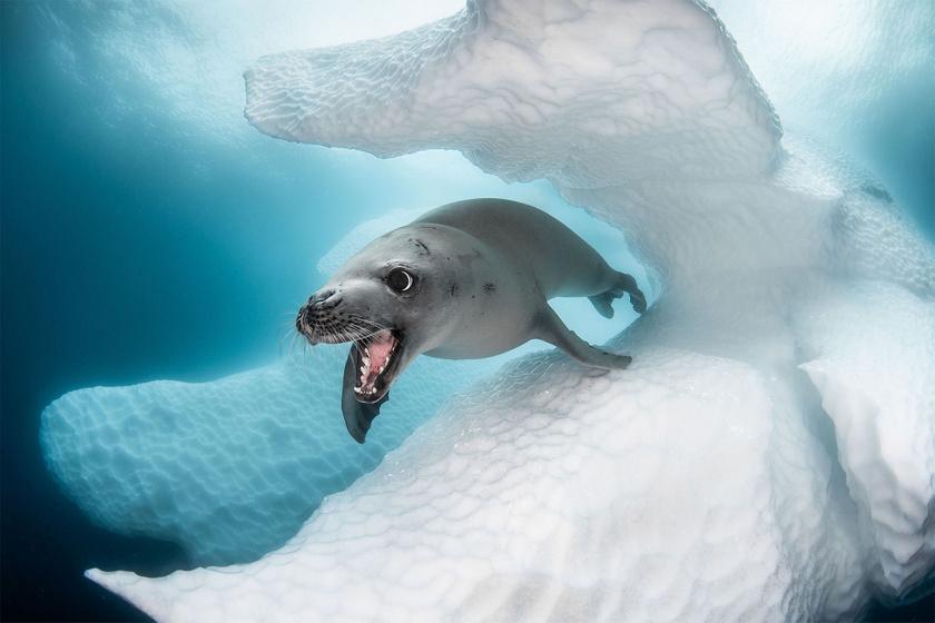 Lenyűgöző élet zajlik a víz alatt: azt mutatták meg a fotósok, amit nem láthat akárki