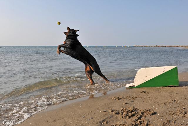 stockfresh 1569189 flyball-on-the-beach sizeM