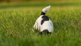 Miért eszi a kutya a földet? És mikor lehet ez veszélyes?