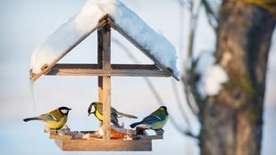 Így csalogasd be a madarakat a kertedbe