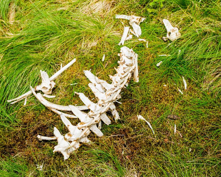 csontok