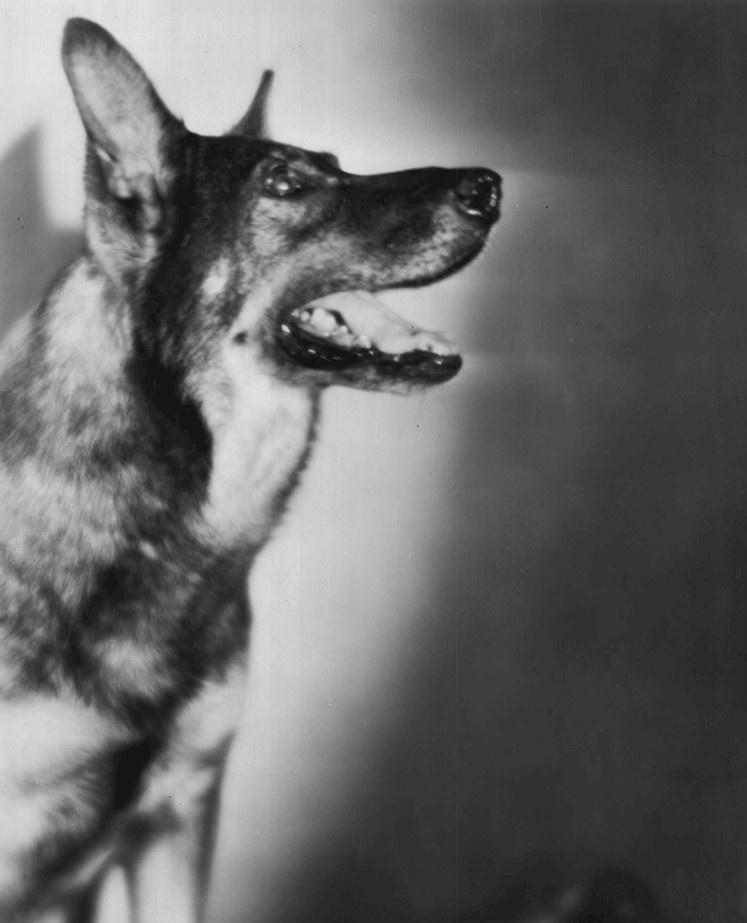 Rin Tin Tin.
