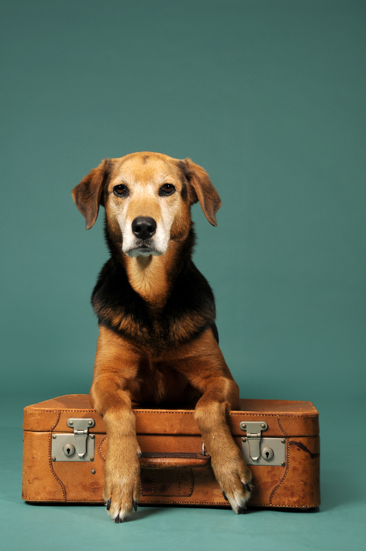 kutya-borond