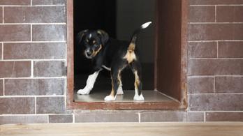 Váltságdíjért kerülnek elő az eltűnt kutyák Sepsiszentgyörgyön