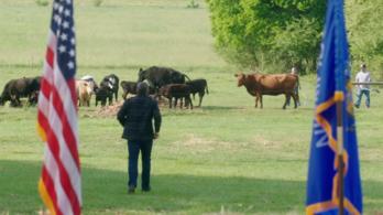 A tehenek közül is emelkedhet fel igazán jó politikus