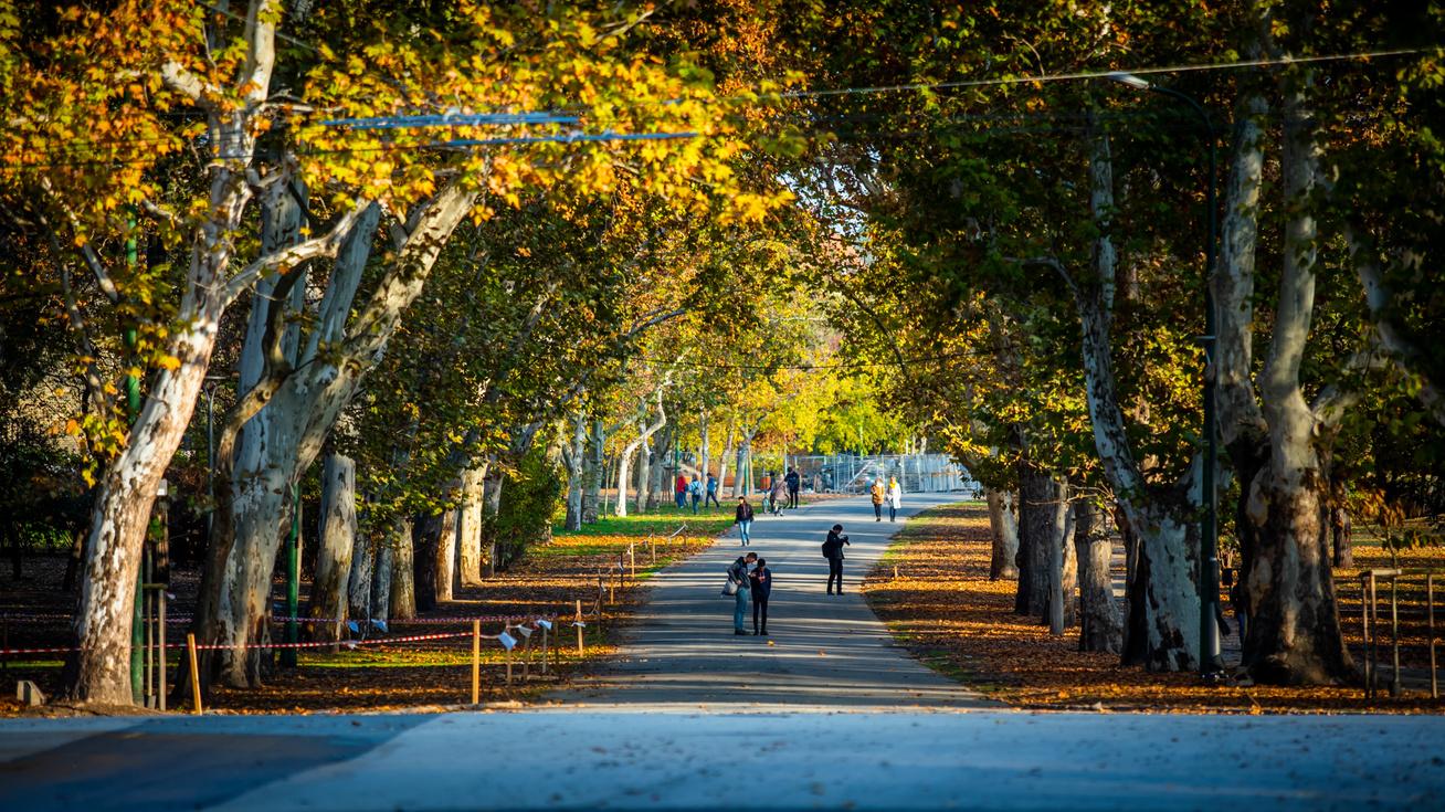 Az Olof Palme sétány szűkítésével közel 5000 m2 zöldfelületet ka