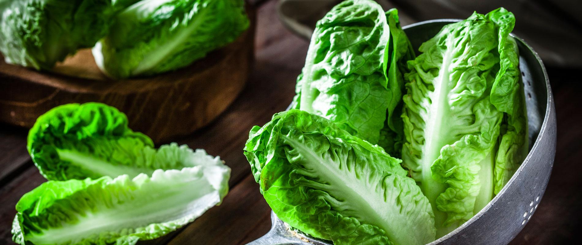 saláta3cover